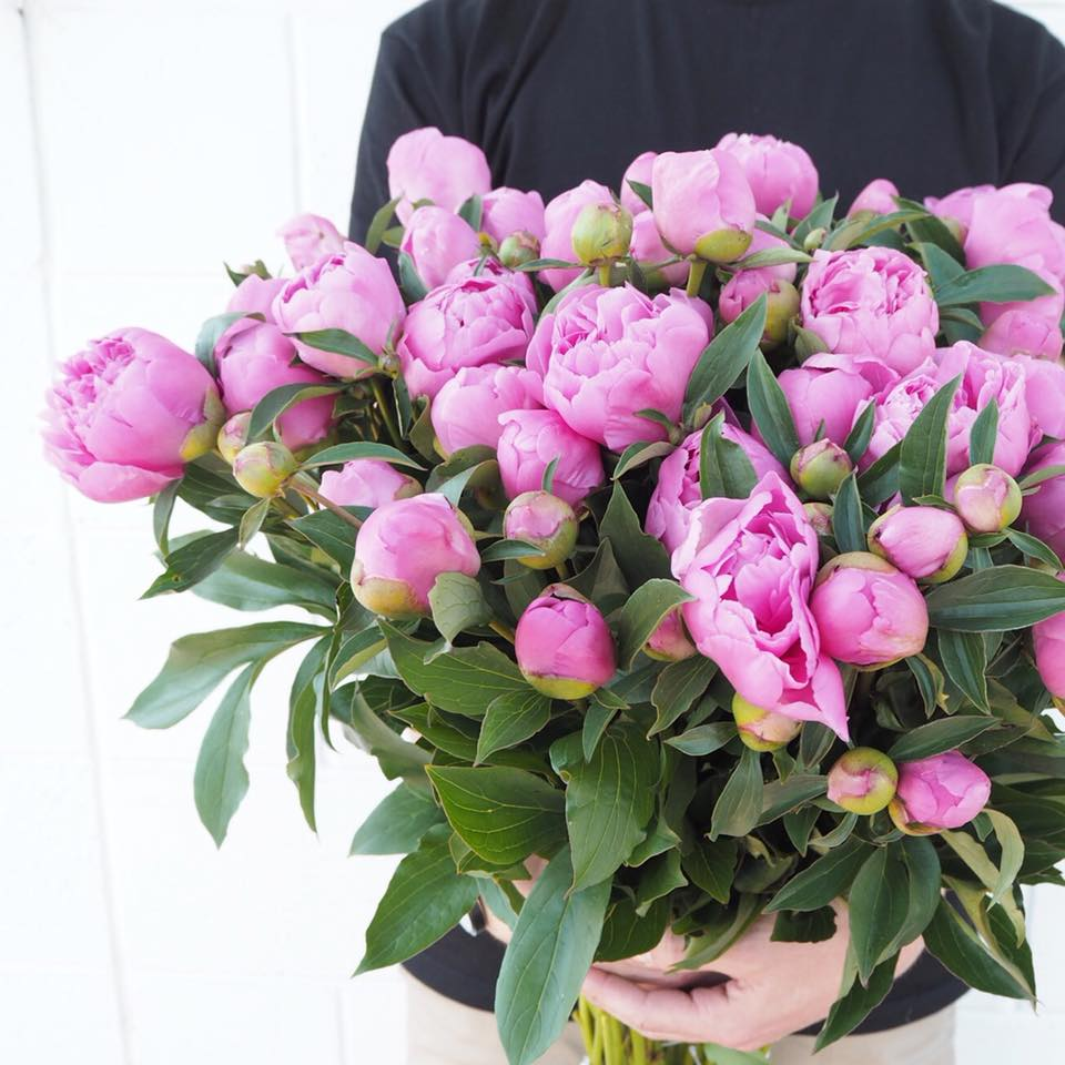 The Top 5 Places To Get Your Peonies This Month Adelaide Loves